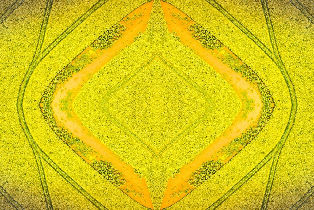 Canola kaleidoscope  by pusspup