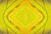 6th Oct 2020 - Canola kaleidoscope