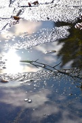 6th Oct 2020 - Hope in a puddle