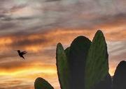 6th Oct 2020 - Humdinger of a Sunrise