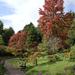 Autumn colours 4 by neiljforsyth
