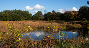 6th Oct 2020 - Cranberry Bog