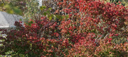 6th Oct 2020 - Fall colors 002
