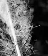 6th Oct 2020 - White feather