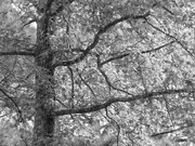 7th Oct 2020 - Branches...