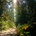 Hiking day by teriyakih