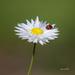 Ladybird Luck by glendamg