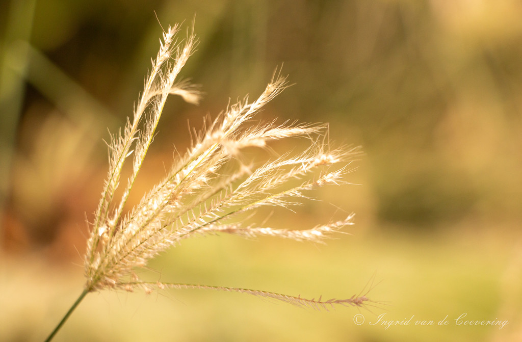 Weed in the sun by ingrid01