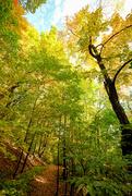7th Oct 2020 - Woodland Path