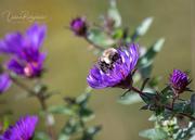 5th Oct 2020 - Love Bumblebee's
