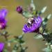 Love Bumblebee's