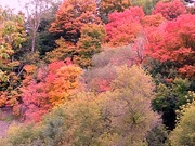 7th Oct 2020 - Autumn has arrived with its glorious colors..