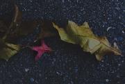 7th Oct 2020 - The Fallen.....
