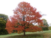 7th Oct 2020 - Favourite Tree