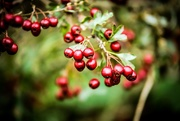 7th Oct 2020 - Berries