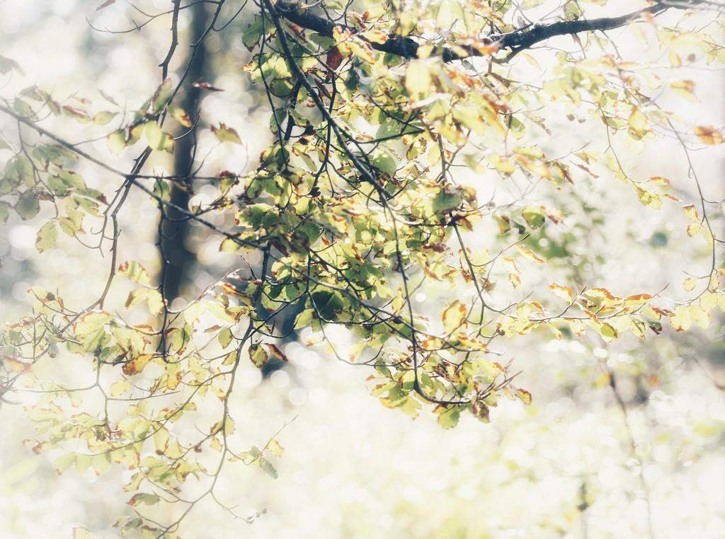 Tarn Woods by motherjane