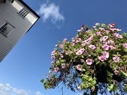 7th Oct 2020 - Flowers and Tower
