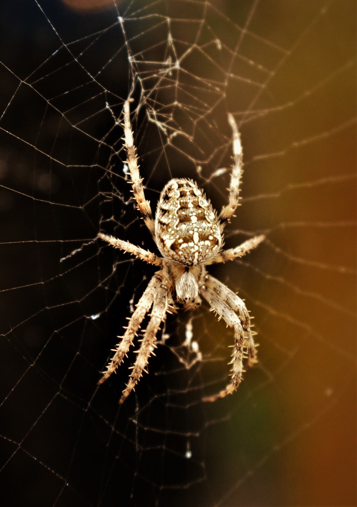 Itsy Bitsy Spider by madeinnl