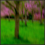 8th Oct 2020 - Cherry blossom time