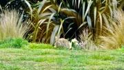 8th Oct 2020 - Rabbits