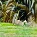 Rabbits by maggiemae