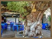 8th Oct 2020 - Old Tree,Kato Zakros,Crete