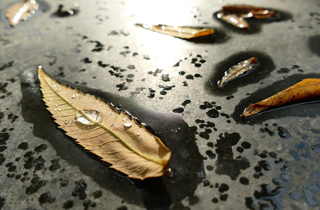 autumn leaves by marijbar