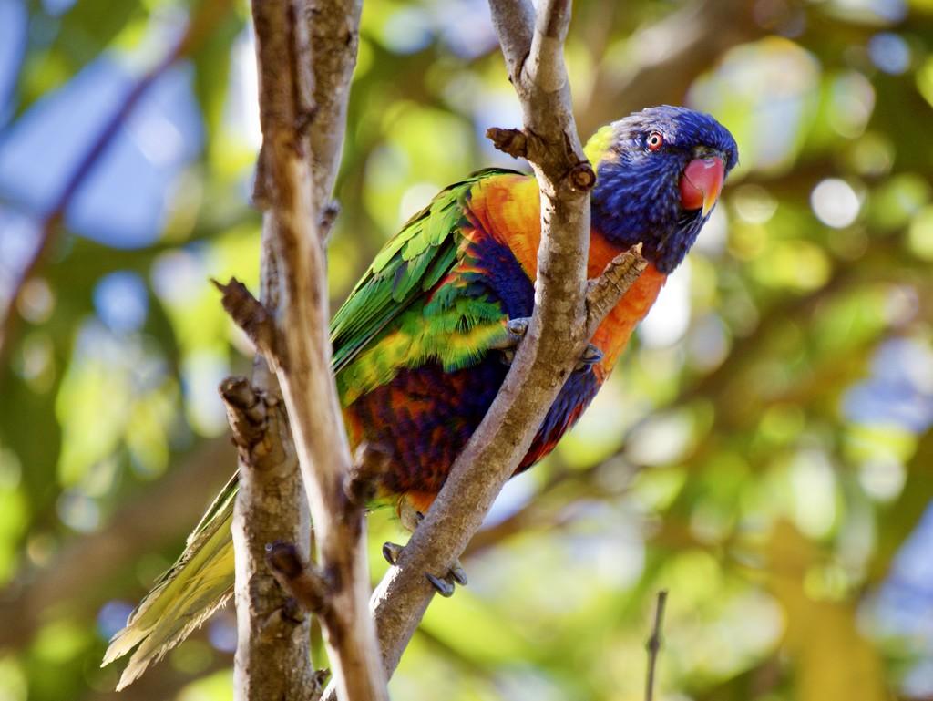 Who's A Pretty Bird? PA081482 by merrelyn