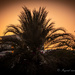 The palm opposite our house by ingrid01