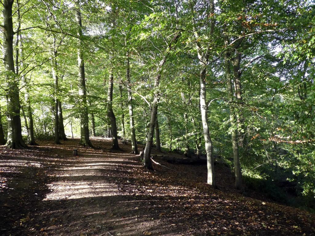 Styal Woods by cmp