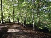 8th Oct 2020 - Styal Woods