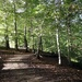 Styal Woods