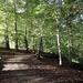 Styal Woods