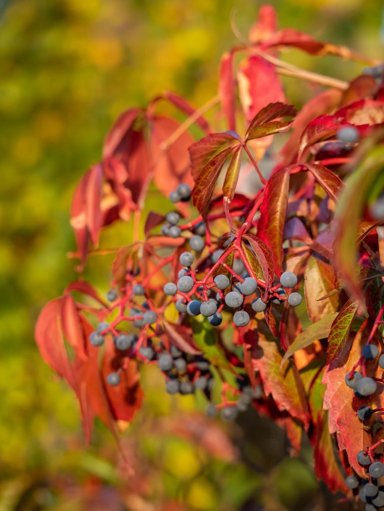 Autumn colors by haskar