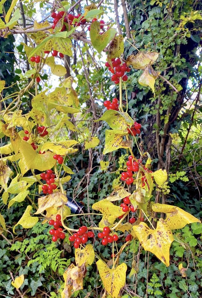 Autumnal garland.  by 365projectdrewpdavies