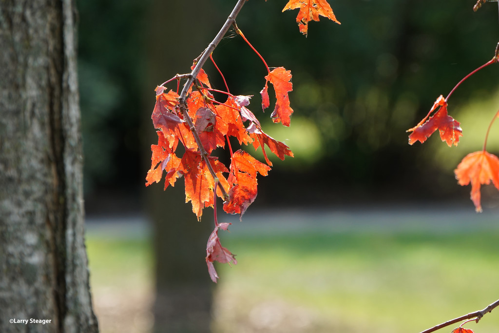 Fall colors 006 by larrysphotos