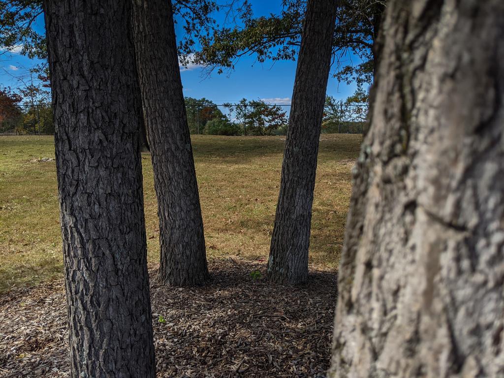 Mini-grove by mallocarray