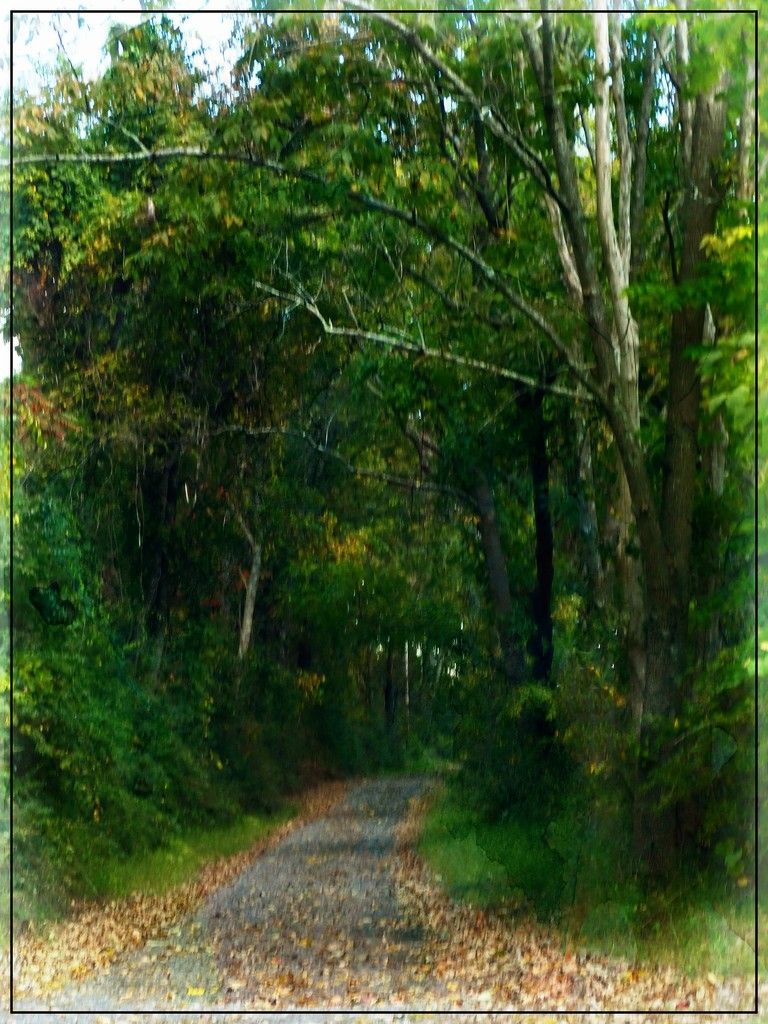 The Path that Leads to Autumn by olivetreeann
