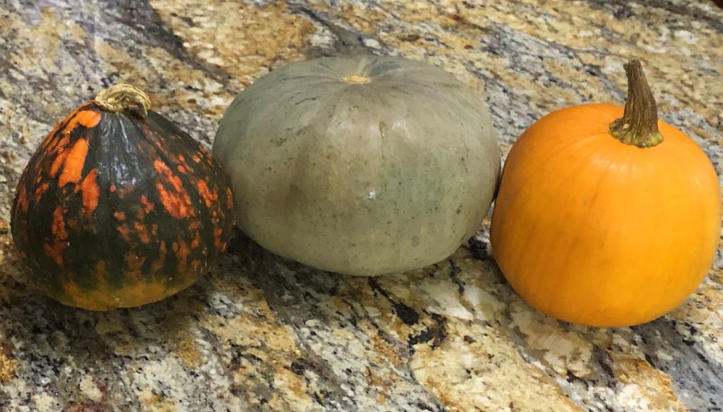 Three pumpkins by homeschoolmom