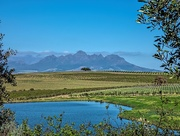 9th Oct 2020 - A View from my favourite wine estate