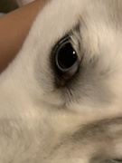 5th Oct 2020 - Her pupils are always this size