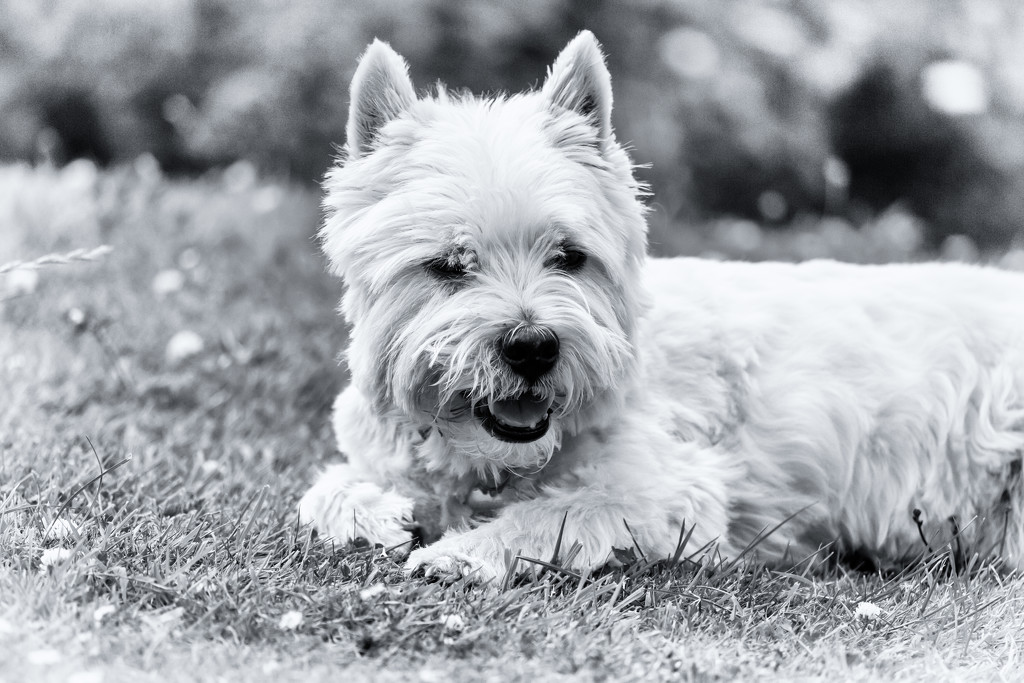 Finlay by pamknowler