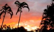 9th Oct 2020 - Tonights sunset through the palms