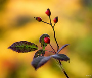 8th Oct 2020 - Autumn colours