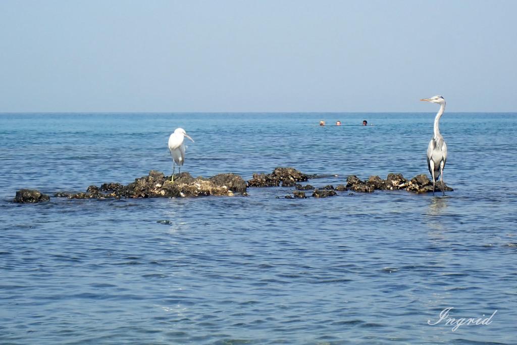 Last beach to beach... by ingrid01