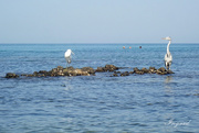 9th Oct 2020 - Last beach to beach...