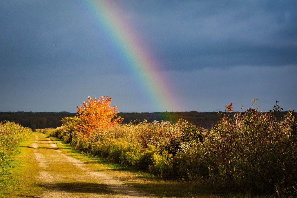 Fall Colours and a Rainbow by mgmurray