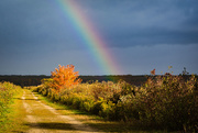 8th Oct 2020 - Fall Colours and a Rainbow