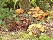 7th Oct 2020 -  Fungus