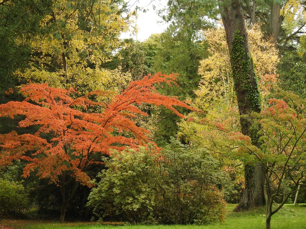 Autumn Colours at Hergest Croft  by susiemc